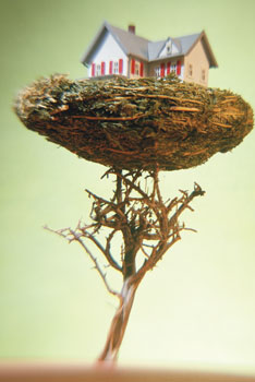 House in a bird nest