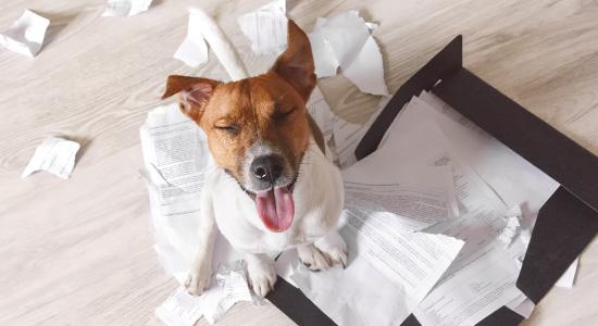 Do dogs eat homework