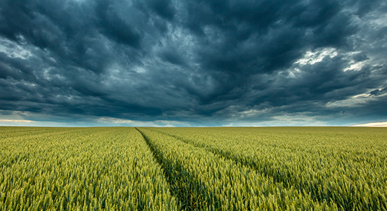 storm clouds above field