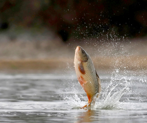Federal court denies states' request for 